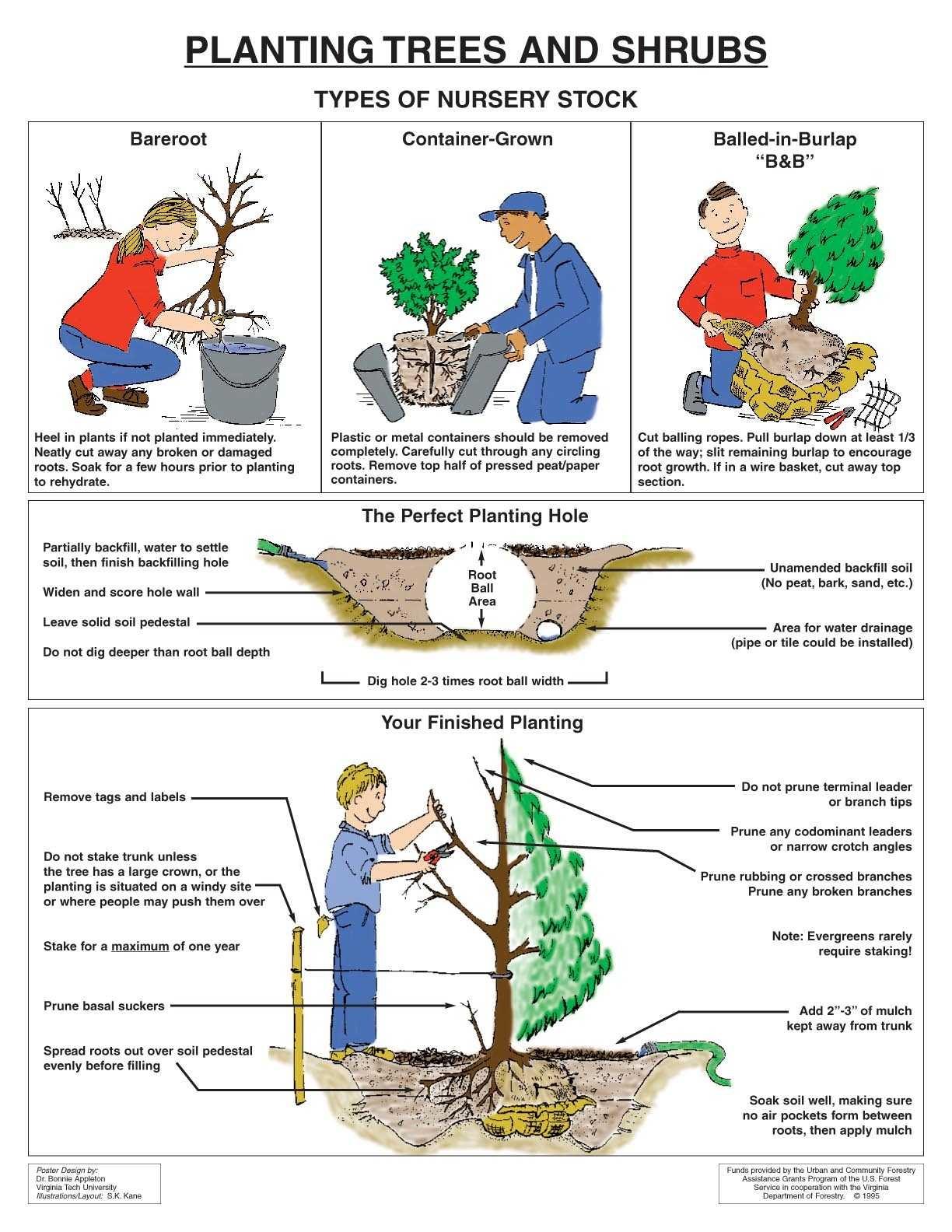 handout_Planting-Trees-Shrubs